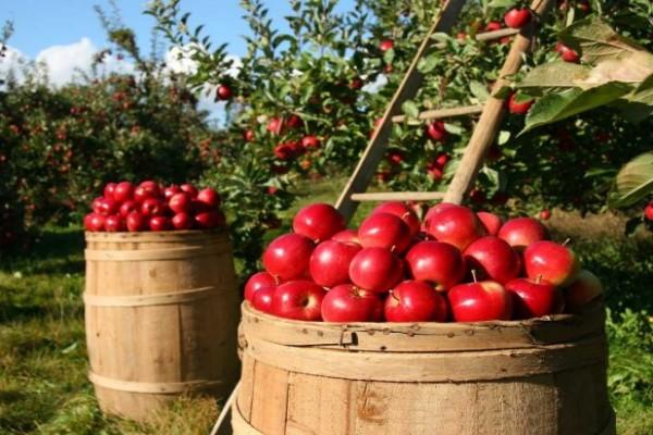 Organska hrana: Zašto je dobra i kako da krenete da je proizvodite?