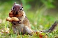 Kako jesti orašaste plodove