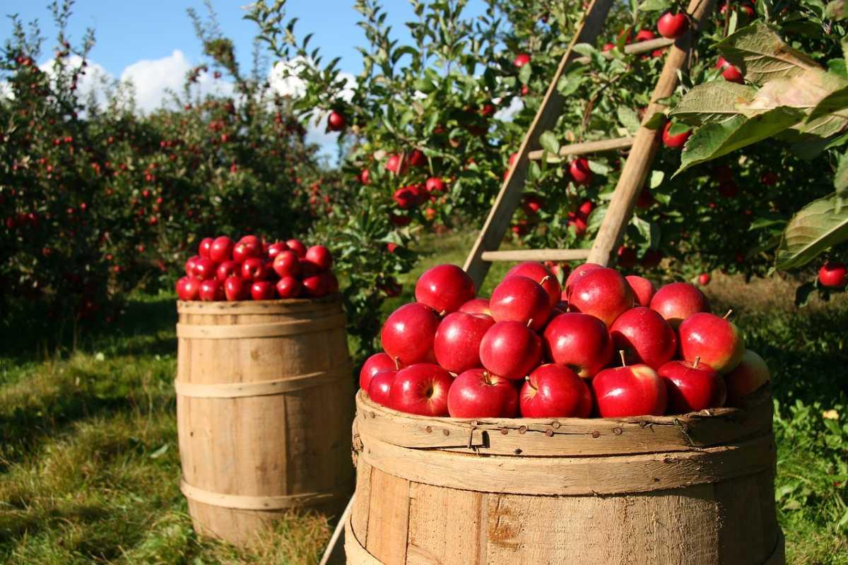 organska hrana proizvodnja